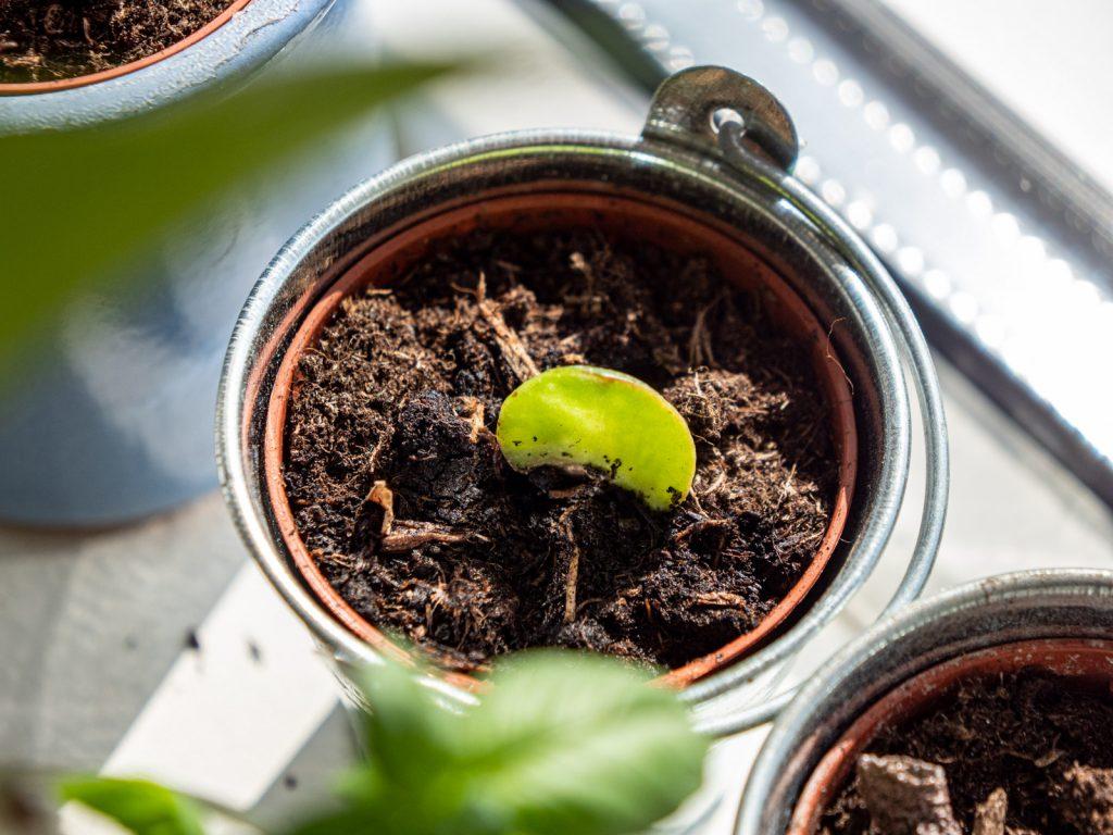 vetplant-stekje