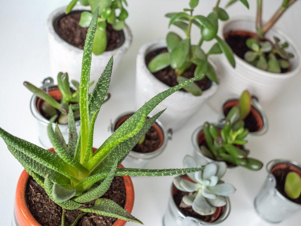 vetplanten-verzorgen