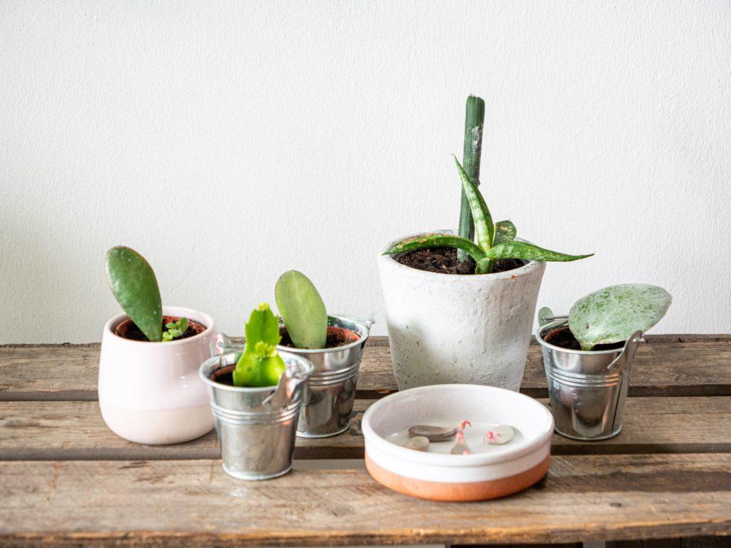 vetplant-stekken-aarde