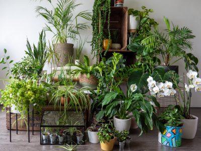 overal-tuinieren-planten