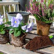 balkon-winterklaar-herfstbloeier-heide-violen-kokospotgrond