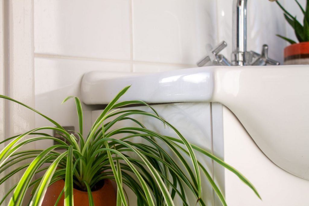 planten-donkere-badkamer