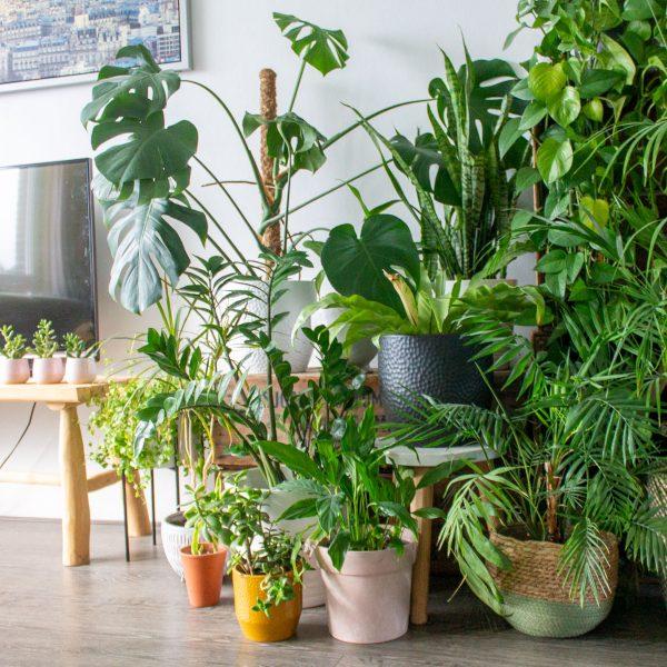 kamerplanten-water-geven