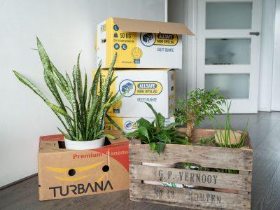 kamerplanten-verhuizen