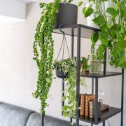 hangplanten-binnen