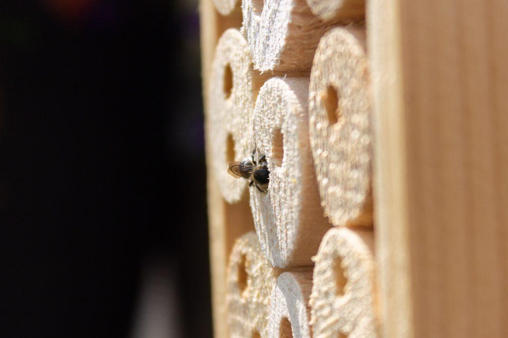 insectenhotel-ophangen