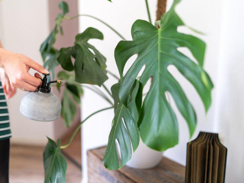 Planten sproeien